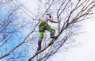 Landywood Landscaping Tree Surgery